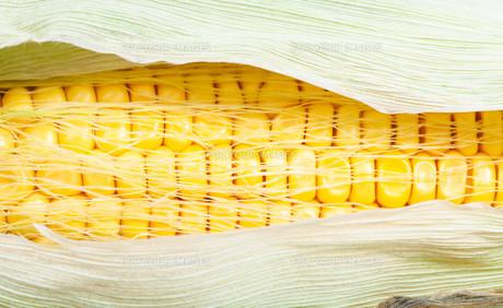 yellow seeds in ripe ear of cornの写真素材 [FYI00776422]