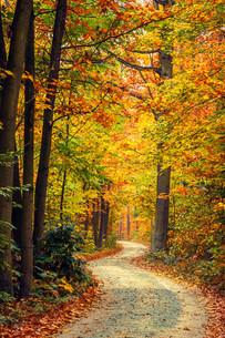 Autumn forestの素材 [FYI00776692]