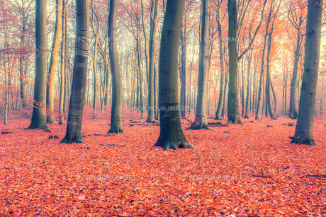 Colorful autumn forestの素材 [FYI00776735]