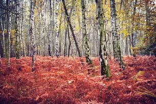 Autumn forestの素材 [FYI00776738]