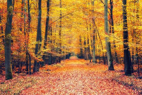 Autumn forestの素材 [FYI00776764]