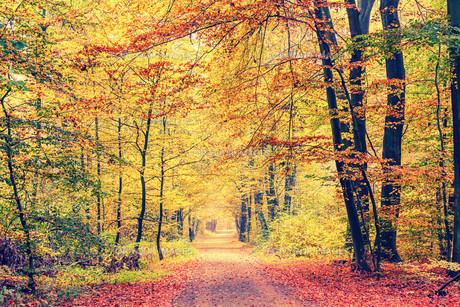 Autumn forestの素材 [FYI00776807]