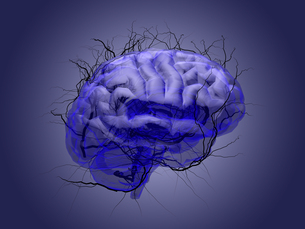 Brain root concept of a root growing in the shape of a human brain.の写真素材 [FYI00776808]