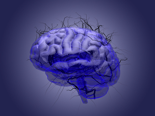 Brain root concept of a root growing in the shape of a human brain.の写真素材 [FYI00776811]