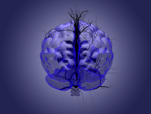 Brain root concept of a root growing in the shape of a human brain.の写真素材 [FYI00776818]