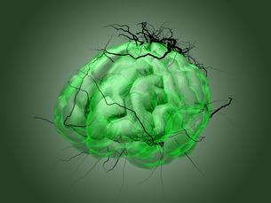 Brain root concept of a root growing in the shape of a human brain.の写真素材 [FYI00776823]