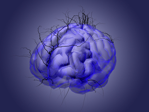 Brain root concept of a root growing in the shape of a human brain.の写真素材 [FYI00776832]