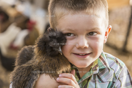 Handsome Young Boy with Show Chickenの写真素材 [FYI00777097]