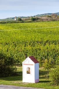 God''s torture near Hnanice with autumnal vineyard, Southern Moravia, Czech Republicの写真素材 [FYI00777281]