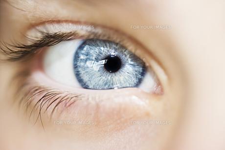 insightful look eyes boyの素材 [FYI00777767]