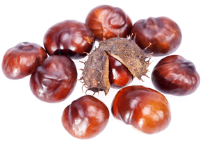 fruits of chestnuts in dry shell isolated on white backgroundの写真素材 [FYI00777790]