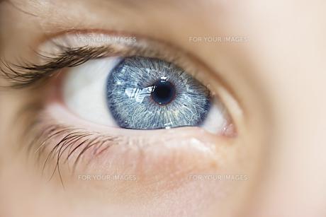 insightful look eyes boyの素材 [FYI00777797]