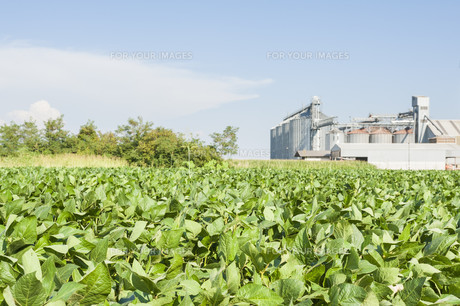 agricultureの写真素材 [FYI00777989]