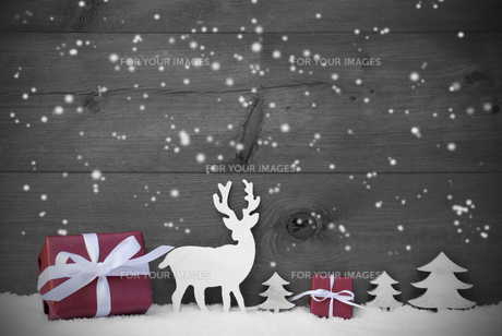 black and white christmas card snowflakes red giftの写真素材 [FYI00778215]