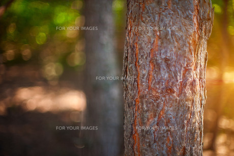 Forestの素材 [FYI00779842]