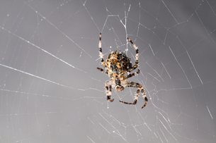 insects_spidersの写真素材 [FYI00779844]