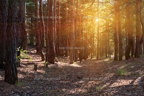Forestの素材 [FYI00779856]