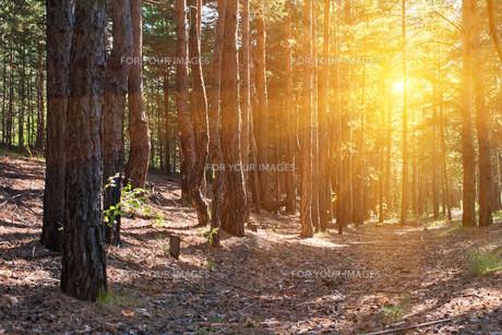 Forestの素材 [FYI00779909]