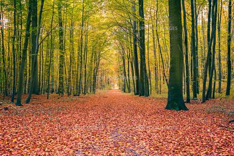 Autumn forestの素材 [FYI00779986]