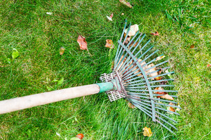 raking leaves from lawn by rakeの写真素材 [FYI00780288]