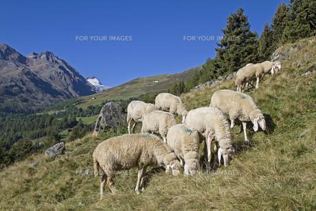 useful_animalsの写真素材 [FYI00781453]