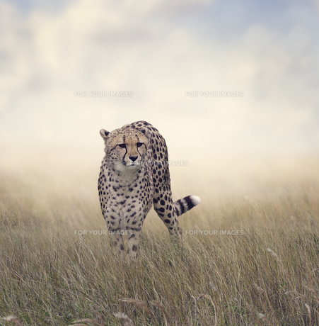 mammalsの写真素材 [FYI00782338]