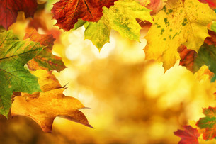 autumn leaves framing a nice bokeh backgroundの写真素材 [FYI00783417]