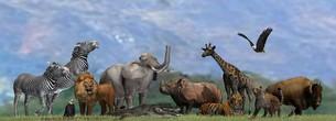 wild animals in natureの写真素材 [FYI00783469]