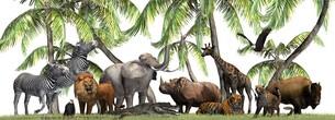 wild animals in natureの写真素材 [FYI00783479]