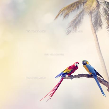 birdsの写真素材 [FYI00783745]