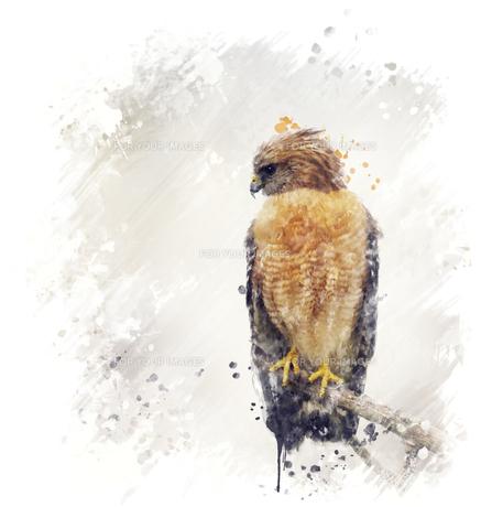 birdsの素材 [FYI00783747]
