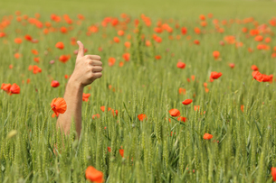 Hand with thumbs up in the middle of a meadowの写真素材 [FYI00783963]