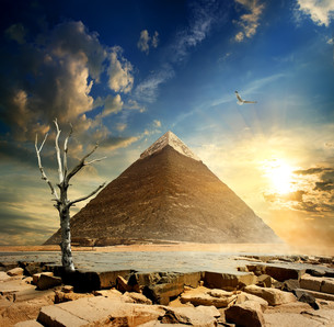 Pyramid and dry treeの写真素材 [FYI00784291]