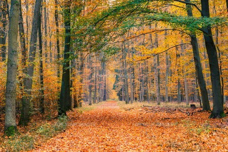 Autumn forestの素材 [FYI00784390]