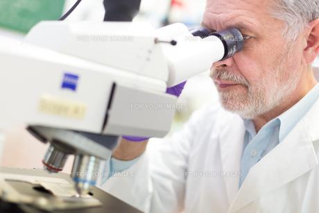 Senior scientist  microscoping in lab.の写真素材 [FYI00784426]