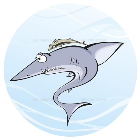 shark whith remoraの写真素材 [FYI00784549]