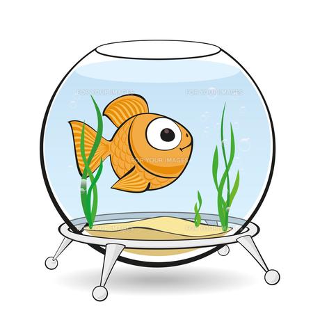 gold fish in aquariumの写真素材 [FYI00784554]
