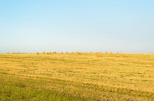 Field with round balesの写真素材 [FYI00784562]