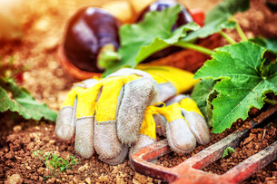 Agricultural still life outdoorsの写真素材 [FYI00784732]