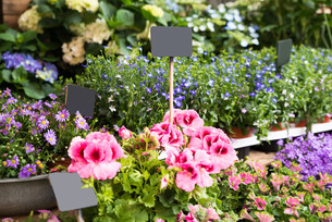 Close-up Of Flowers And Plantsの写真素材 [FYI00784928]