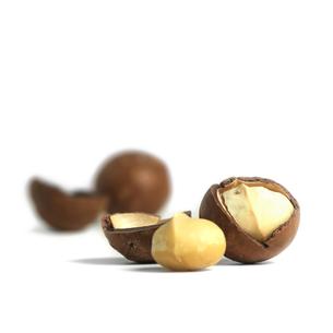 macadamia nutsの素材 [FYI00785343]