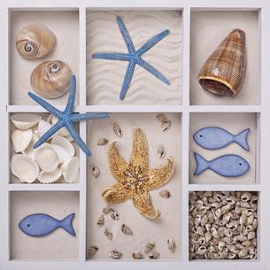 Seashells in a white boxの写真素材 [FYI00785916]