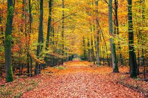 Autumn forestの素材 [FYI00785994]