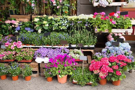 Flowers And Plants Outside Of Shopの写真素材 [FYI00786555]