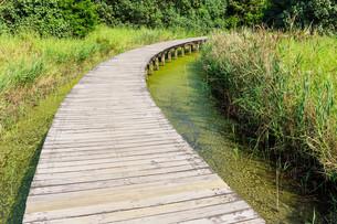 Wooden walkwayの写真素材 [FYI00787081]
