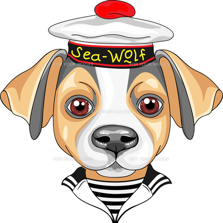 vector cartoon dog Jack Russell Terrier sailorの写真素材 [FYI00788823]