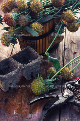 Cut autumn plantsの写真素材 [FYI00788843]