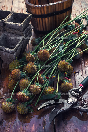 Cut autumn plantsの写真素材 [FYI00788853]