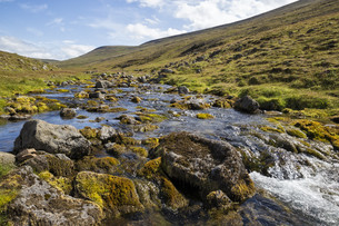 small mountain streamの写真素材 [FYI00789206]