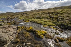 small mountain streamの写真素材 [FYI00789229]